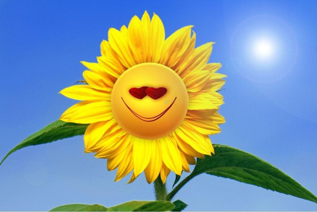 sun-flower-493951_1280